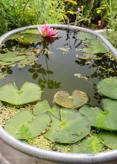 Container Fish Pond, Container Water Gardens, Container Gardening, Fish Ponds Backyard, Outdoor Ponds, Garden Ponds, Outdoor Ideas, Outdoor Spaces, Outdoor Living