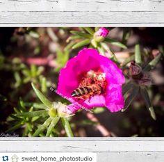 Друзья, подписывайтесь на новости нашей фотостудии, чтобы не пропустить самое интересное Repost @sweet_home_photostudio ・・・ Мы работаем индивидуально с каждым нашим клиентом! Учитываем Ваши пожелания и вкусовые предпочтения ➡️Приём заказов: sweethomephotostudio@mail.ru ⬅️ #фотокартины#фотограф#фотографРоссия#природа#цветы#фото#фотоназаказ#интерьер#дизайнинтерьера#декор#Краснодар#Воронеж#Севастополь#Казань#Ростов#Сочи#Уфа#Екатеринбург#followus#nature#photooftheday#picoftheday#flowers#