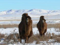 #Mongolie #winterreis #TiaraTours