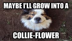 """""""Maybe I'll grow into a collie-flower."""""""