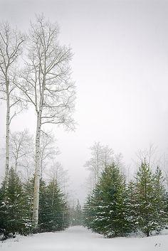 Snowy Beckoning, British Columbia | Flickr - Photo Sharing!