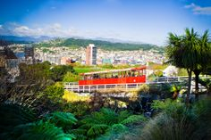 The Cable Car in #Wellington Wellington New Zealand, New Zealand Travel, Travel Ideas, Things To Do, Dolores Park, Cable, Activities, City, Things To Make