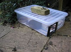 How to stop cats, dogs and foxes stealing the hedgehogs food » Epping Forest Hedgehog Rescue