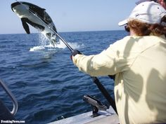 Whale Fishing Learn how to catch any kind of fish with great tips including lures and bait at howtocatchfishnetwork.com