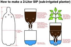 Should have done this for my plants unit!! Great idea!