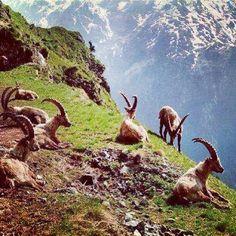 Kurdistan Mountains