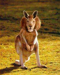 Hybrid Animals | Hybrid-animals-Hybrid-ani-003.jpg