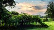 hd tree shelter wallpaper download