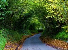 Hobbit Tree Tunnel, Dancersend, England photo by algo Beautiful Roads, Beautiful World, Beautiful Places, Beautiful Pictures, The Places Youll Go, Places To See, Tree Tunnel, Big Sur California, All Nature
