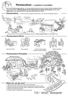 permaculture posters by Sarah Beare
