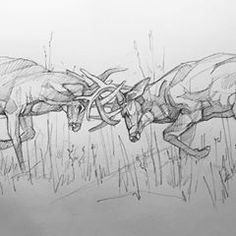To celebrate the big fight this weekend, here's two heavyweights from the November woods. This slugfest is my ---- Pencil Drawings Of Animals, Cool Art Drawings, Deer Drawing, Line Drawing, Deer Hunting Tattoos, Fighting Drawing, Deer Sketch, Deer Tracks, Charcoal Art