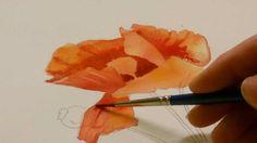 Poppy Head in Watercolour