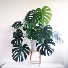 19 Stunning Plants That Will Make You Feel Things