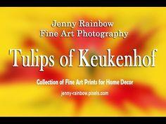 Tulips of Keukenhof. Art Prints For Home, Home Art, Fine Art Prints, Framed Prints, Video Photography, Fine Art Photography, Beautiful Flowers Garden, Art Online, Botanical Gardens