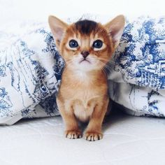 Top 50 des chatons si mignons qu'on aimerait les câliner.. Jusqu'à la mort !
