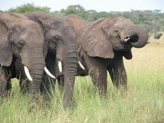 A trio of elephants, submitted by Emily Schultz.