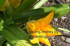 Actual money saved by gardening