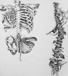 Best Ideas For Flowers Sketch Tattoo Death – Tattoo Sketches & Tattoo Drawings Kunst Tattoos, Arte Sketchbook, Desenho Tattoo, Anatomy Art, Tattoo Sketches, Art Inspo, Amazing Art, Awesome, Art Reference