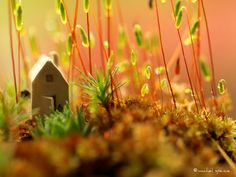 Tiny House in the Moss 11X14  by machelspencePHOTO on Etsy, $25.00