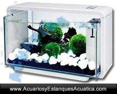 ** 127.80€ ENVIO GRATIS! ** Nano acuario HAILEA BIOTOP NATUR DELUXE 25L http://acuariosyestanquesacuatica.com/acuarios-de-agua-dulce/113-nano-acuario-biotop-natur-deluxe-kit-luz-led-filtro.html