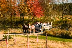 i really want to go on a hayride. right now.