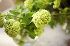 Think that green only comes in the form of foliage? Dozens of green flowers exist and work perfectly for weddings. Here is our green flower guide! Types Of Flowers, Green Flowers, Colorful Flowers, Beautiful Flowers, Wedding Flower Guide, Wedding Flowers, Bouquet Flowers, Bouquets, Wedding Ideas