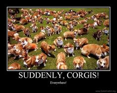 OMG too many corigs!