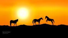 Mustangs at Sunset - ......