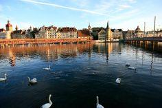 Lucerne - swans