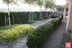 René Don Hoveniers - Moderne Tuin Met Grassen - Hoog ■ Exclusieve woon- en tuin inspiratie.