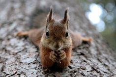 Dr. Phil Squirrel...He looks like he's ready to hear your deepest thoughts and analyze them.