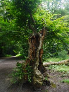 Gli Arcani Supremi (Vox clamantis in deserto - Gothian): Trees, woods and forests
