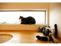 catshouse.jp8 (1)