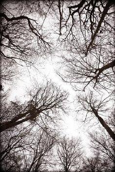 Max Hertlischka - Forest landscape 1