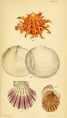 Elements of conchology on Biodiversity