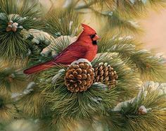 December Dawn-Cardinal by Rosemary Millette : Wild Wings