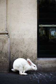Paris, Surprise Bunny