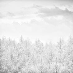 White snow trees clouds sky