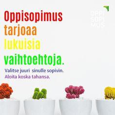 #oppisopimus