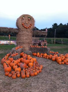 Corn Maze, New Hampshire, Rhode Island, Connecticut, New England, Road Trip, Spaces, Fall, Awesome