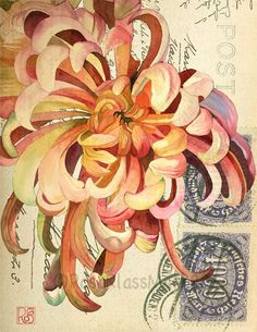 Red Chrysanthemum: Rosa Klass Mark.
