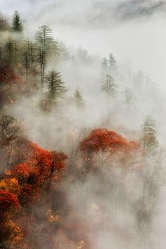 ★ INTO THE MIST (Smoky Mountains)