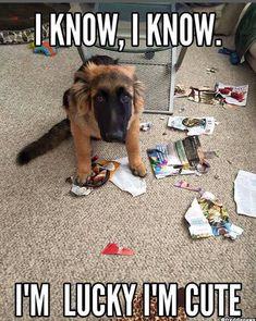 Smol Doggo Dump #dogsfunnyshaming