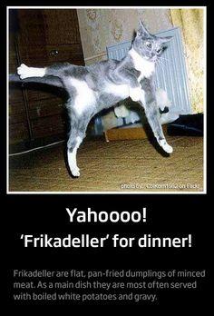 Frikadeller. A dream dinner for Danes as well as cats.