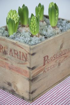 Triple love. Rustic box with hyacinths. Awesome from Liv's Lyst, another cool Norwegian blog.
