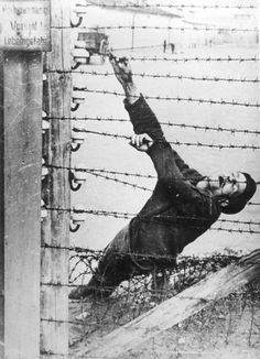 Auschwitz, Poland, 1943, An inmate who committed suicide on the electrified fence.