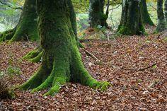 Bosque de Urbasa, Navarra