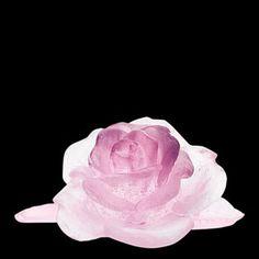 Daum Crystal Roses Pink Flower. Biggs Ltd. Gallery. Heirloom Quality Bridal Gifts. 1-800-362-0677. $345.00.