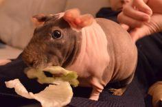 Love salad...