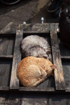 "oooooooo: "" 猫に逢いに行こう - [にゃんこ島]ねこのおもち """
